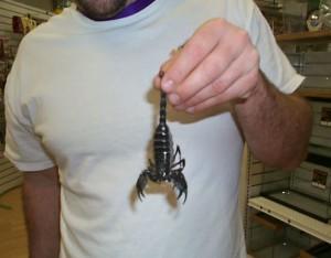 Беззащитный скорпион
